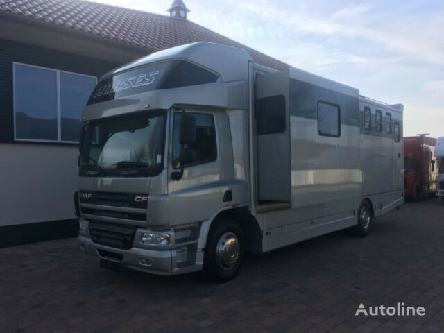 DAF Pferdetransporter hestetransport