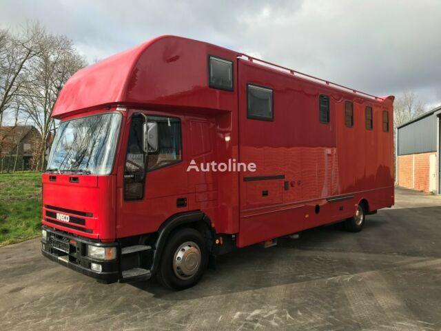 IVECO Pferdetransporter hestetransport