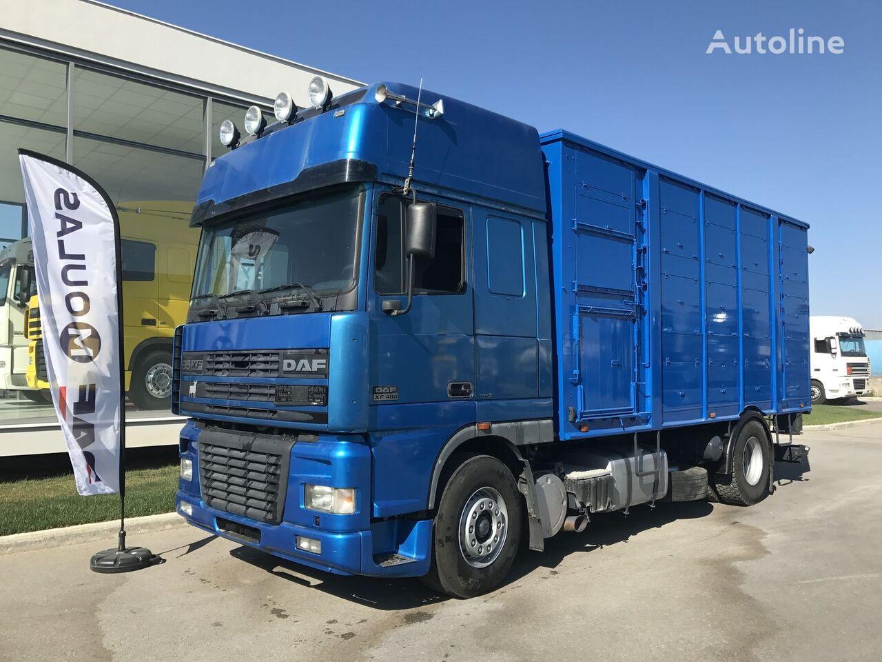 DAF 95XF.480  dyretransport lastebil